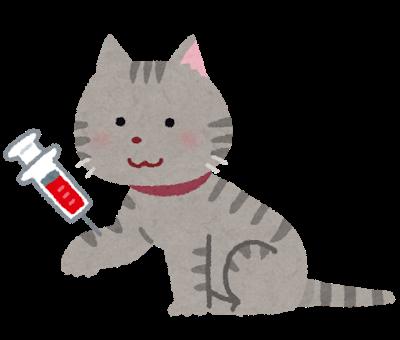 pet_chuusya_cat_saiketsu